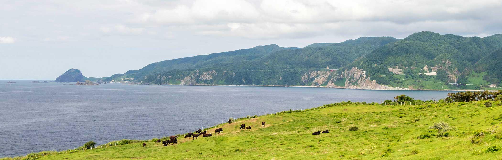 関岬牧場から大野亀方面を望む